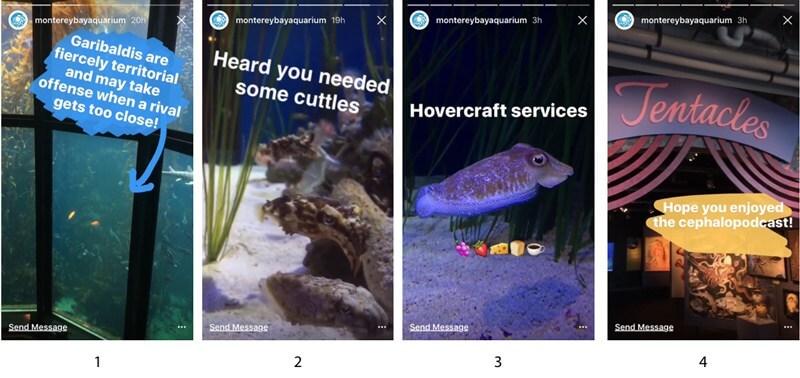 Monterey-Bay-Aquarium-Instagram-Stories.006